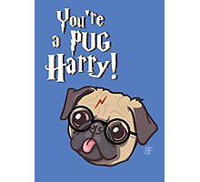 Harry Pug Photographic Print
