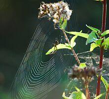Autumn Spiders by Rowan  Lewgalon