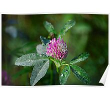 Bejewelled by Nature Poster