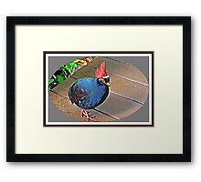 """ The Rouroul crested Partridge"" Framed Print"