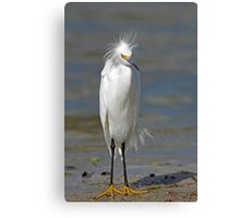 what are you laughing at ... Canvas Print