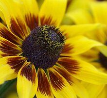 Yellow flower by Kirstyshots