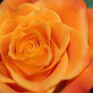 Beautiful  by vbk70