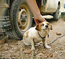 Dog by Catarina Fernandes