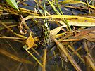 Froggy Green for the Love of Nature 1 by Barberelli