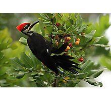 pickin berries Photographic Print