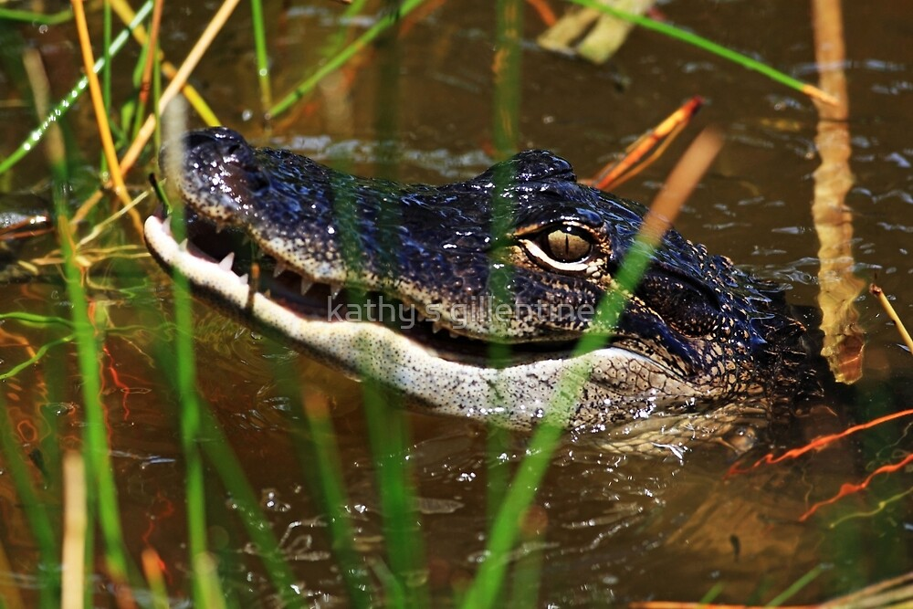 Smile by kathy s gillentine