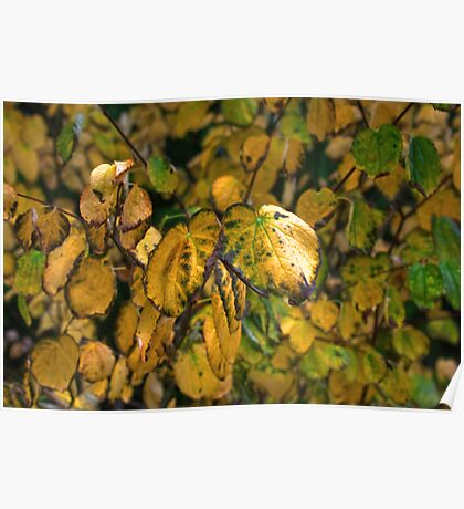 The Changing Leaves Poster