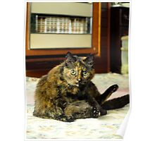 Minni The Cat Poster