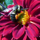 Bee on Purple Flower by Mary Kaderabek-Aleckson