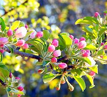 Its springtime in the Annapolis Valley by Karen Cook