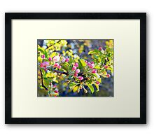 Its springtime in the Annapolis Valley Framed Print