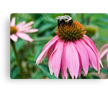 Mr. Bumble B Canvas Print