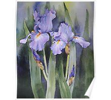 Mauve Iris Poster