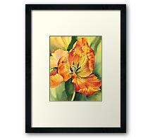 Flame Tulip Framed Print