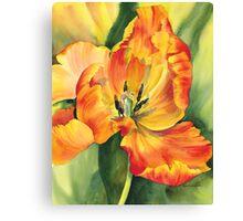 Flame Tulip Canvas Print