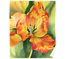 Flame Tulip Poster