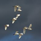 the flock by kathy s gillentine