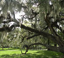 Live Oaks, City Park, New Orleans by WonderlandGlass