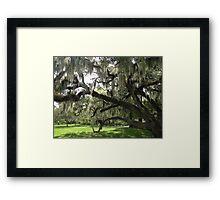 Live Oaks, City Park, New Orleans Framed Print