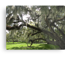 Live Oaks, City Park, New Orleans Metal Print