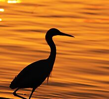 morning glow by kathy s gillentine