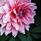 Pretty Petals by AshleyE