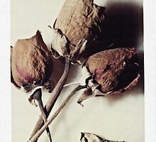 Dried Roses by Carlos Restrepo