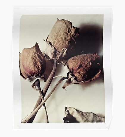 Dried Roses Poster