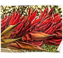 """""""Gymea Lily"""" Poster"""