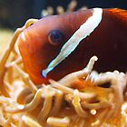 clown fish taking bath by Hannah Grubb
