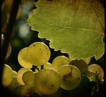 grapes by olivepix