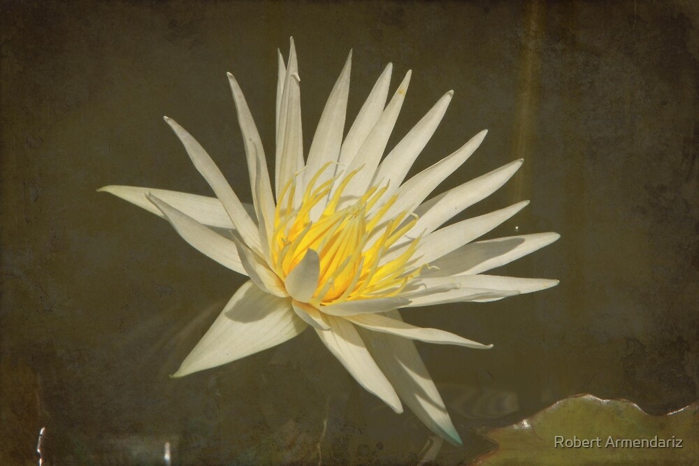 Rhapsody in White Water Lily with Texture by Robert Armendariz