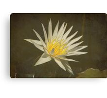 Rhapsody in White Water Lily with Texture Canvas Print