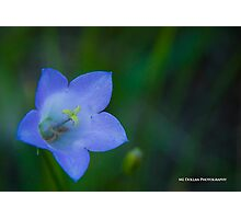 Blue Belle Photographic Print