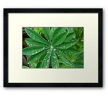 Rain1 Framed Print