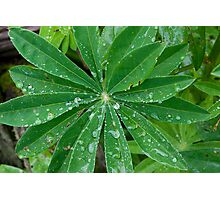 Rain1 Photographic Print