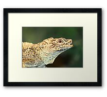Philippine Sailfin Lizard Framed Print