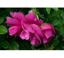 Rain11 Photographic Print