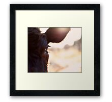 Cows have the most beautiful eyes Framed Print
