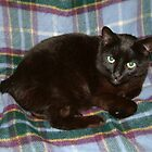 Manx Cat, Manx Tartan by petertucker