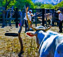 Cow Looking On by John Corney