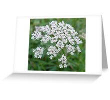 Natures Fireworks Greeting Card