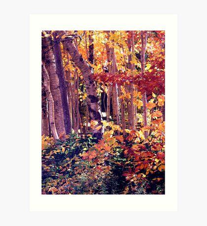 The Woods are Ablaze Art Print