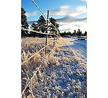 All Along the Barbedwire Photographic Print
