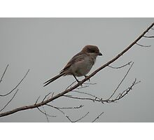 A Bird's Misty Morning Photographic Print