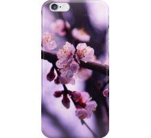 Sakura (4) iPhone Case/Skin