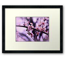 Sakura (4) Framed Print