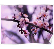 Sakura (4) Poster