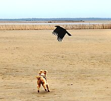 NO 6 - SPIKKELS AND THE CROW 10.48.46 HRS by Magaret Meintjes